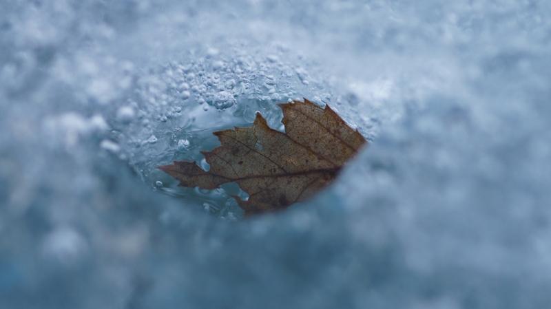 Leht jääs