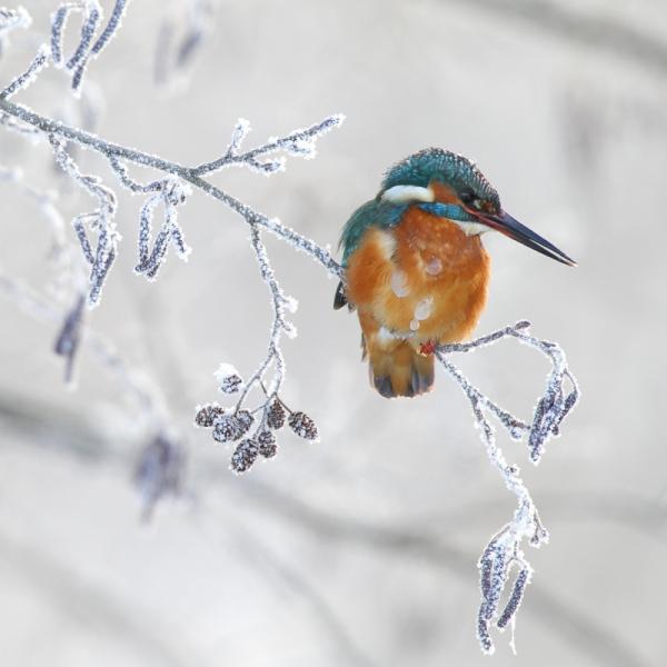 Katsumusterohke talv