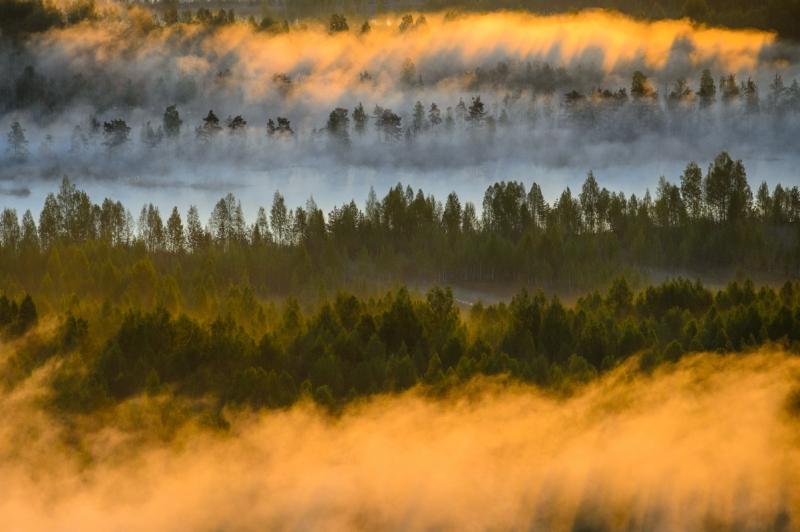 Mets uduleekide vahel