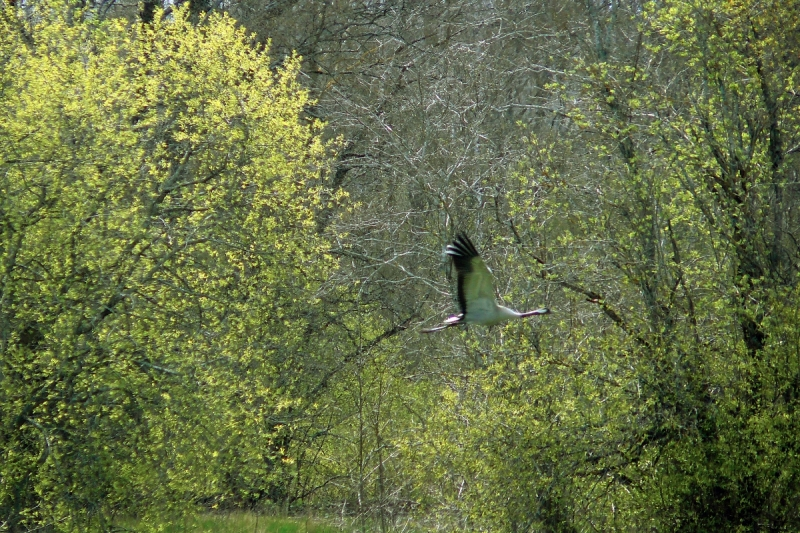 Lend roheluses