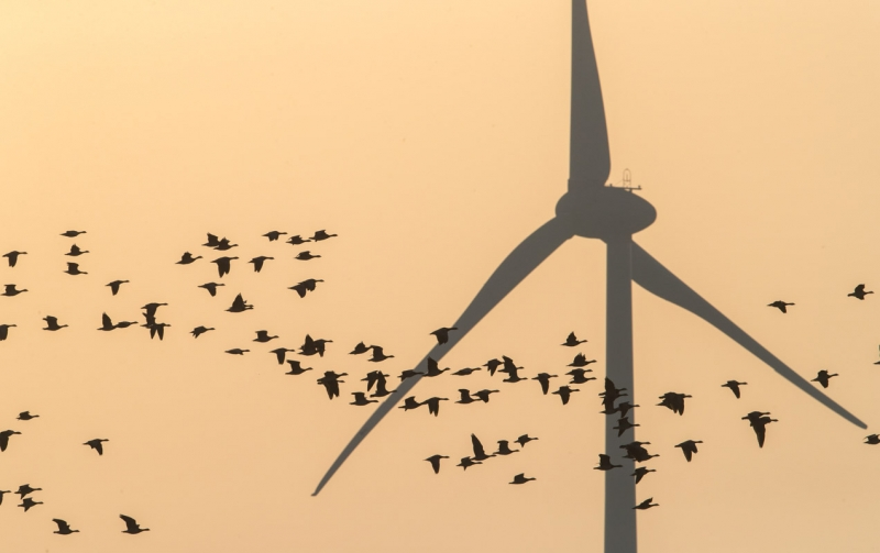 Tuulepüüdjad