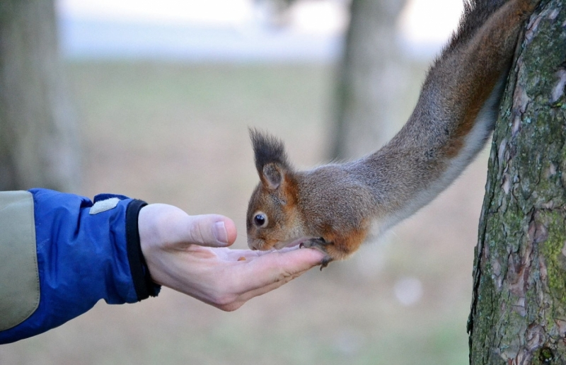 Julge orav