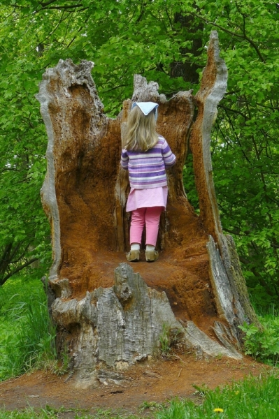 Puu sees