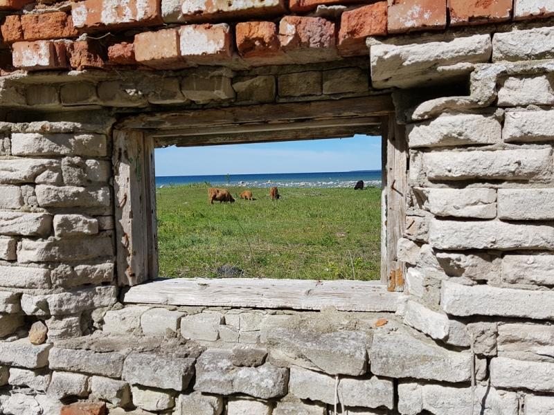 Ajahambast puretud – kaunis maal vanaema maja seinal