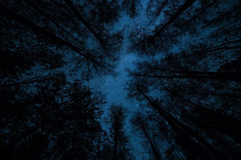 Tähed puudel