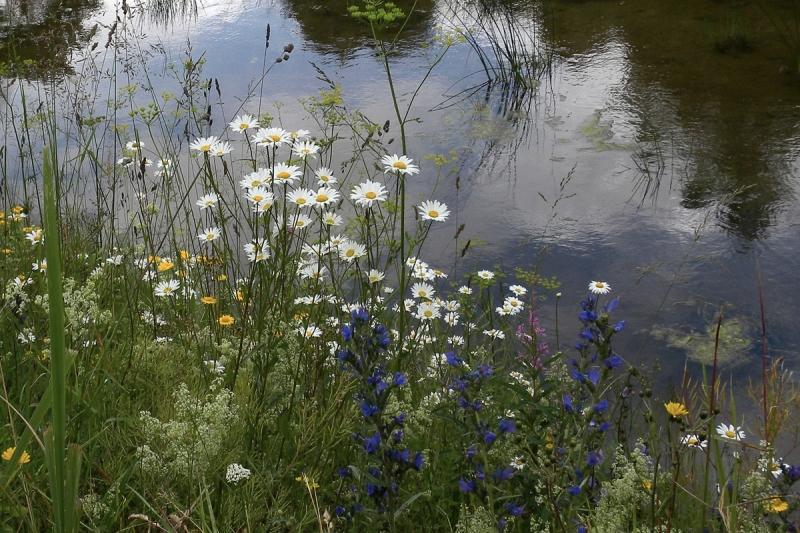 Lilled vee ääres