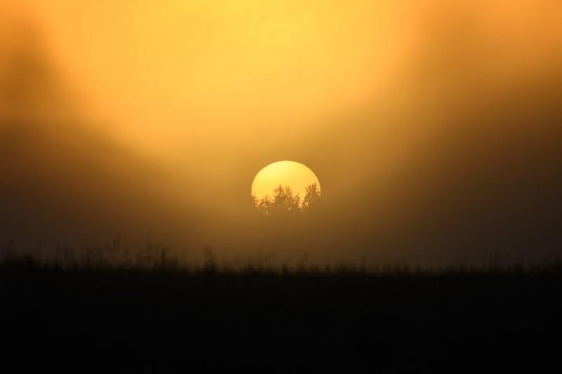 Puud päikeses