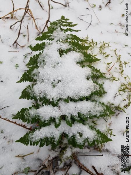 Jõulukuu jõulupuu
