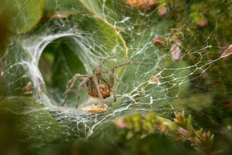 Ämbliku kodu