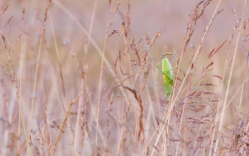 Pea alaspidi rohukõrrel kuivamas