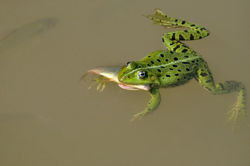 Kalapäev
