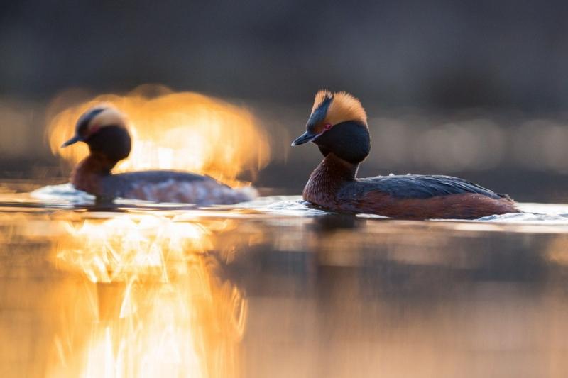 Sarvikpütid päikesetõusul