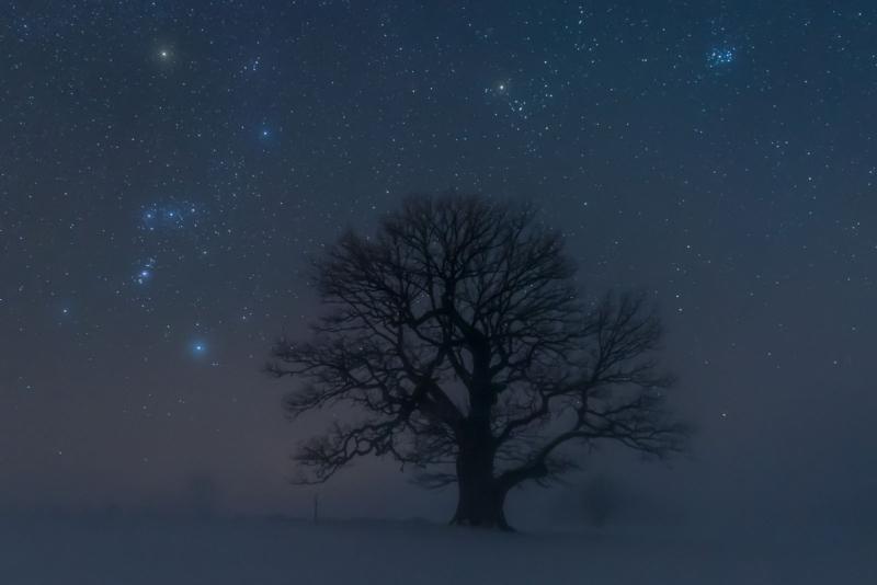 Tammehiid ja Orioni tähtkuju talvises ööudus