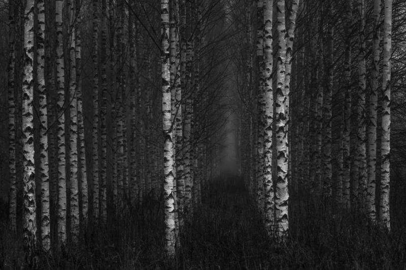 Puud ei lase magada