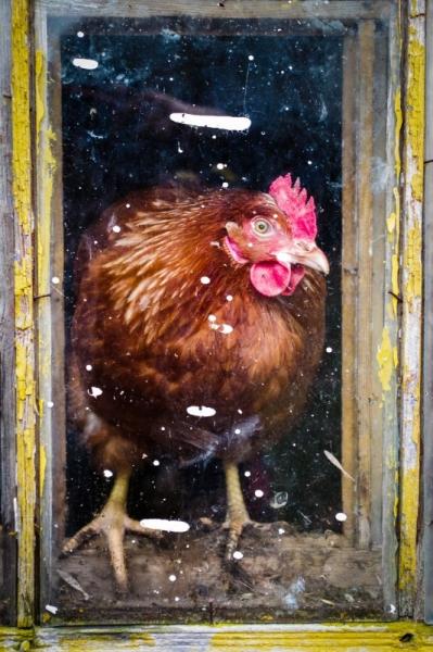 Kana ruudus