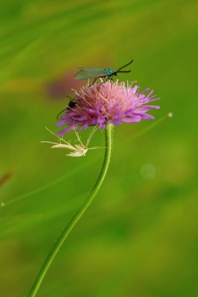 Putukate õhtune kokkutulek