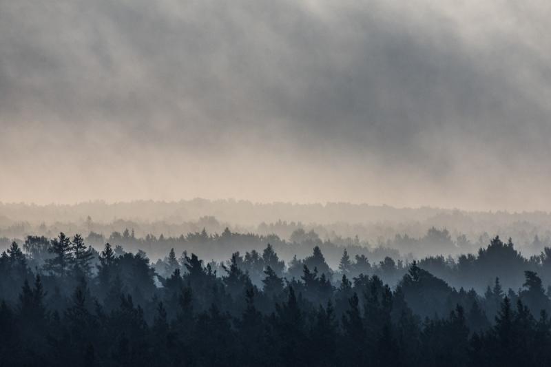 Metsatrepp