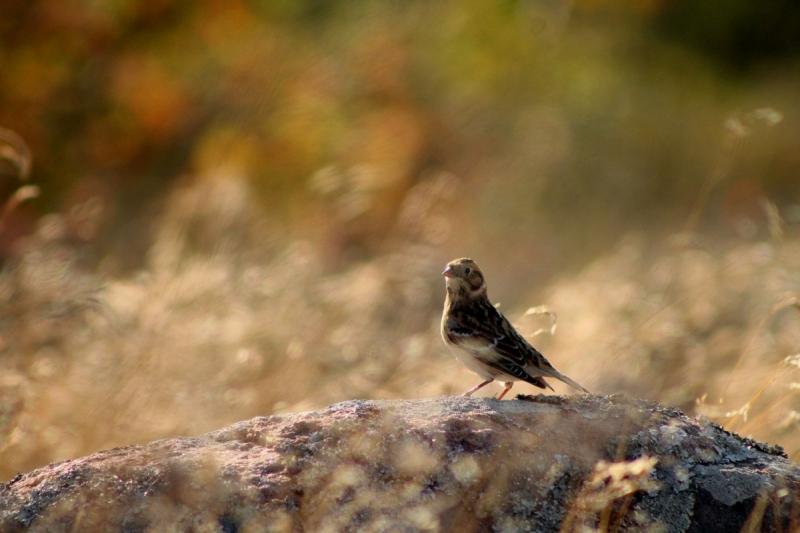 Uudishimulik linnuke