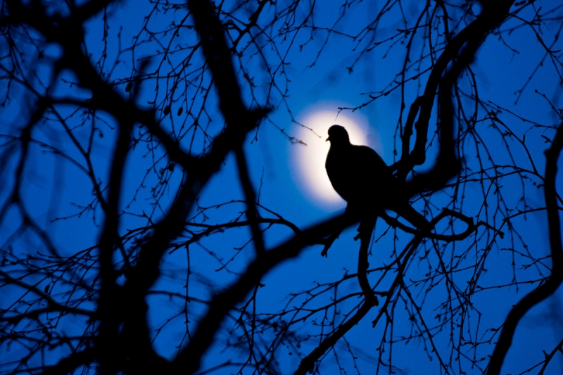 Öös on asju